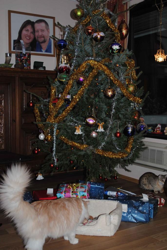 Så er det juleaften og småtassene er 1 uke gamle. Sees her sammen med deres bror SGC+IC Skogbekken's Cupid