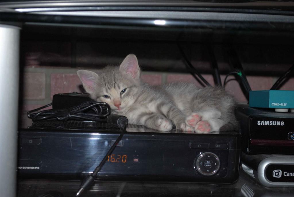 7 uker. Mitt navn er Fenris og lykken er å smådøse på en varm kabel-TV-boks når man blir litt trett!